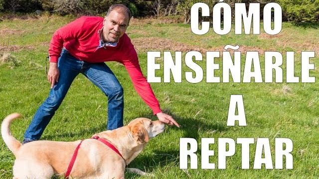 Enseña a tu perro a reptar