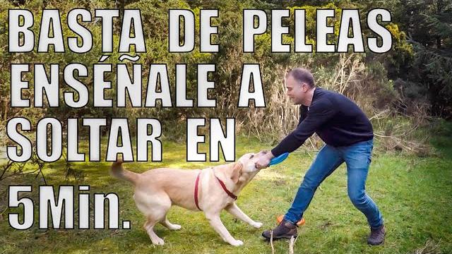 Enseña a tu perro a soltar a la orden