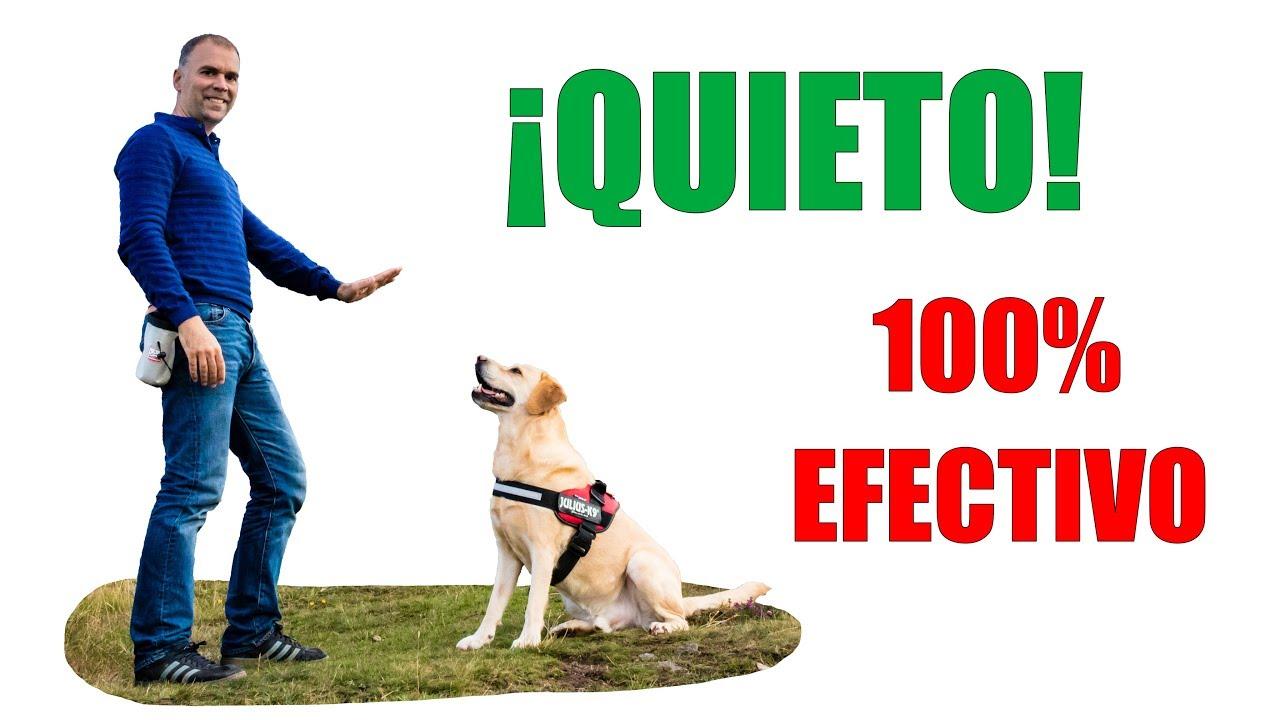 Enseña a tu perro el quieto
