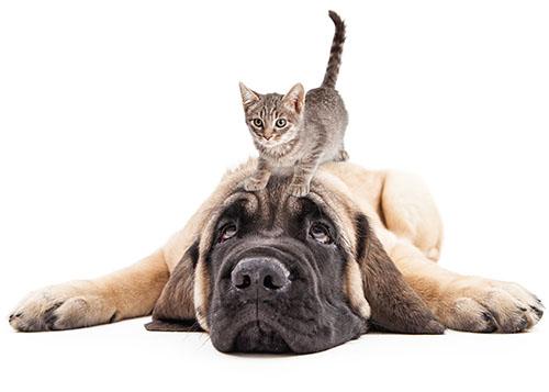 Juntar Perros y gatos
