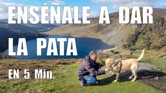 enseña a tu perro a dar la pata
