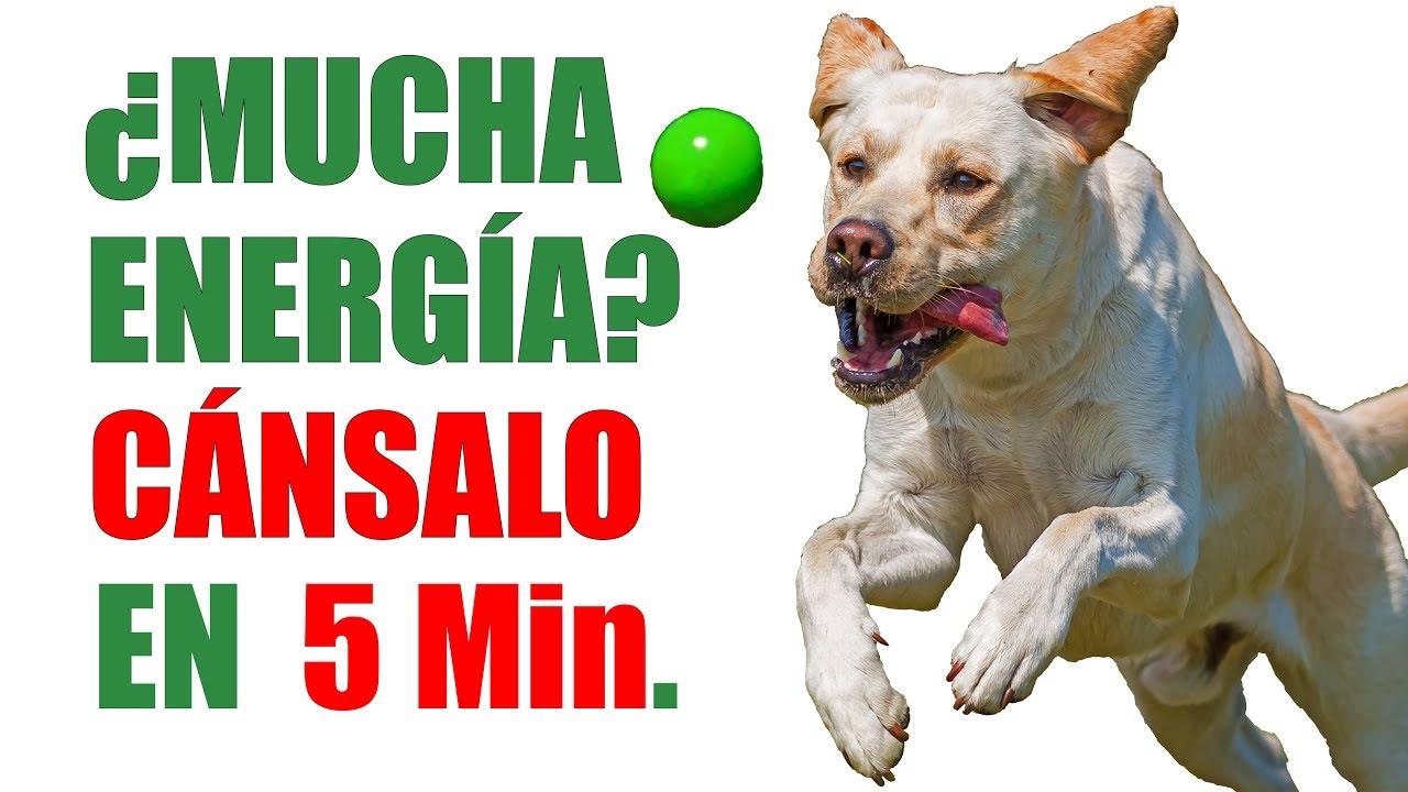 enseña a tu perro a jugar a la pelota