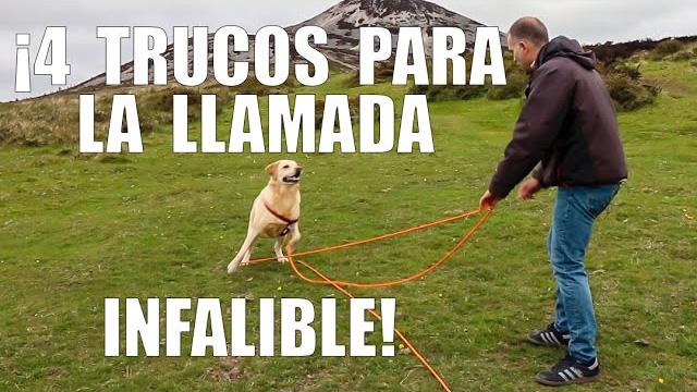 enseña a tu perro a venir a la llamada
