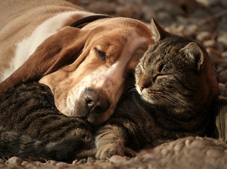 juntar un perro y un gato