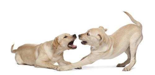 Perros agresivos y tipos de agresividad